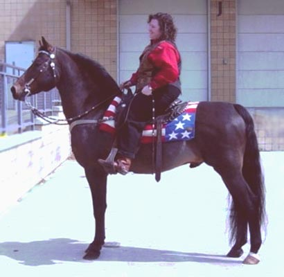 Baroncrest Nuggeteer - Lippitt Morgan Stallion